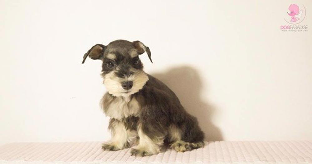 Dog Paradise- Shop thú cưng - Pet Shop số 1 TP. HCM
