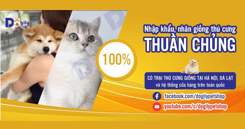 Dogily- Cửa hàng mua bán chó mèo cảnh và các loại thú cưng
