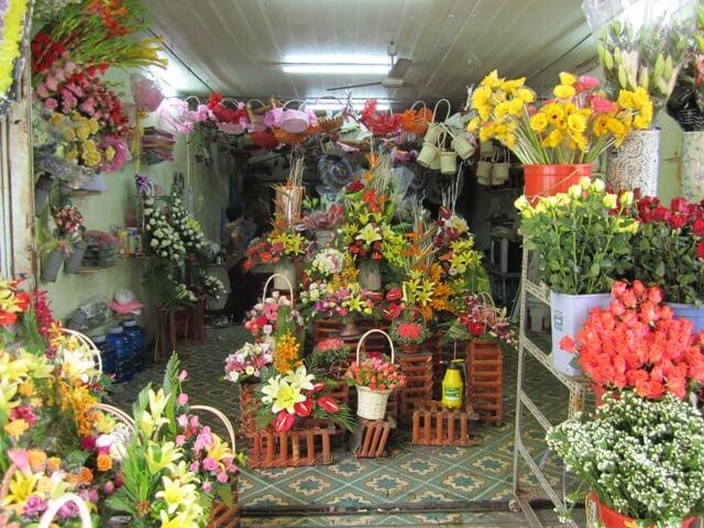 shop hoa hami plants art
