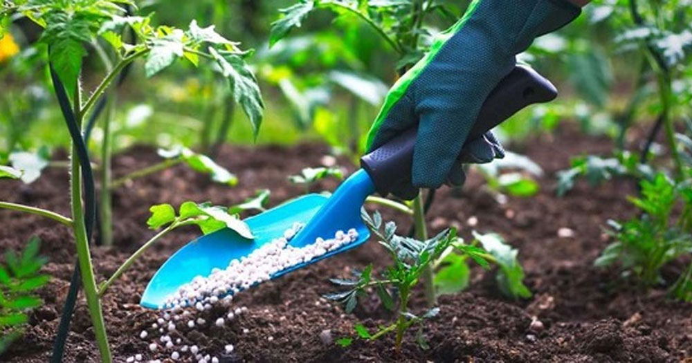 Tầm quan trọng của phân bón trong nông nghiệp